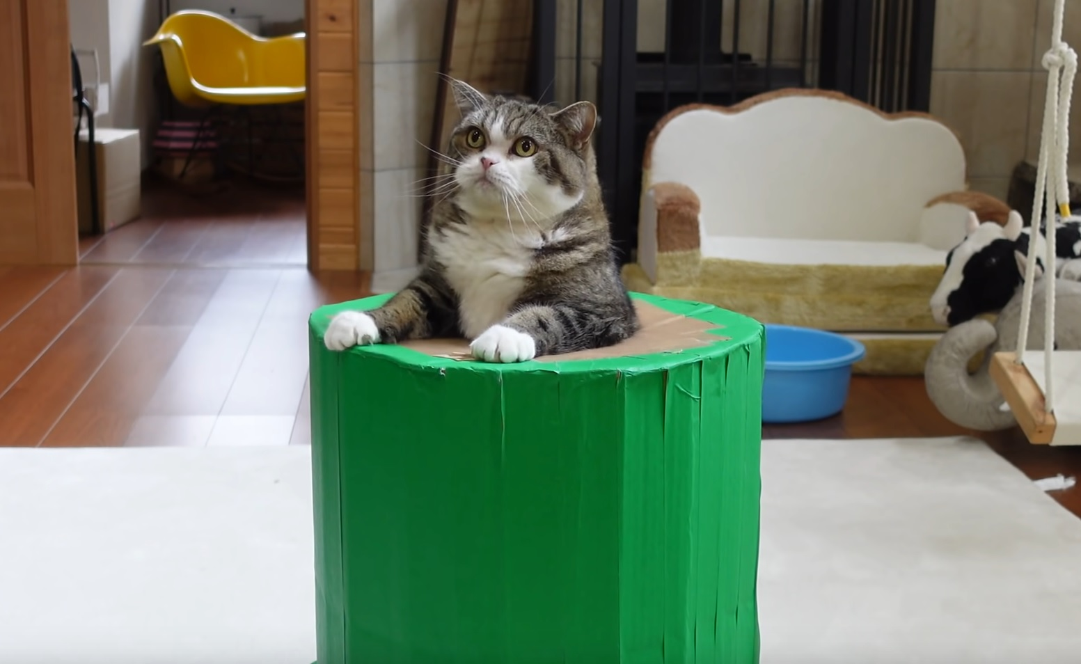 Maru Cannot Get Out Of Pipe
