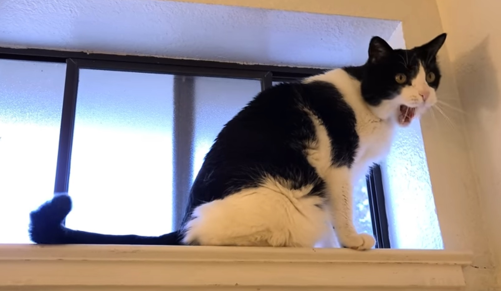 Watching Hooman Shower