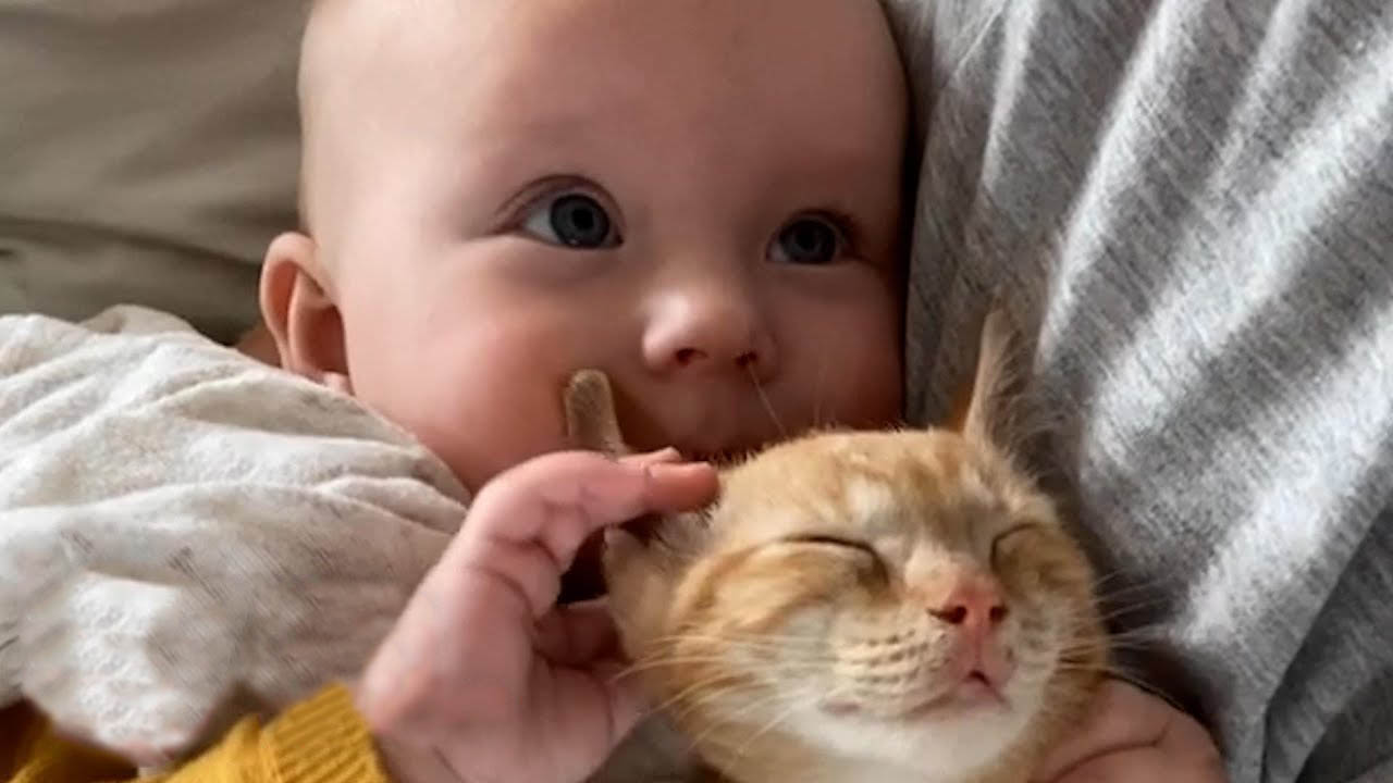Baby girl and her kitten brother are inseparable