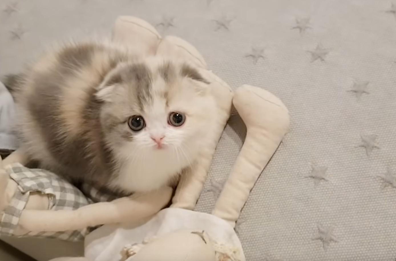 Cutest Tiny Kitten