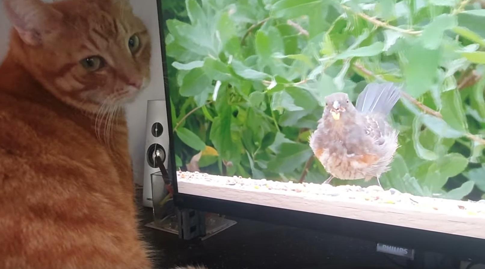 Alvi Watching Kitty TV