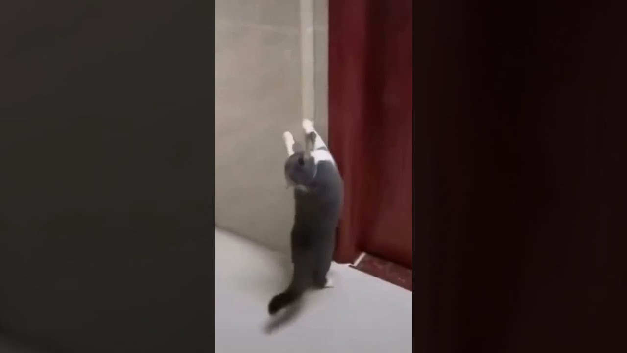 Funny Cat Does Weird Move
