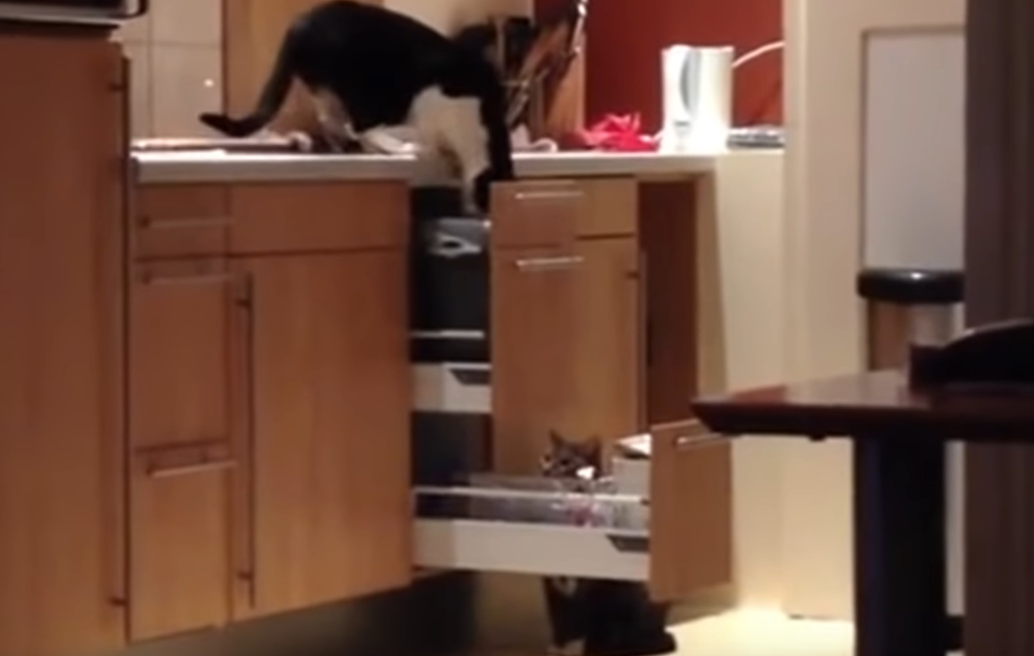 Smart Kitty In Action