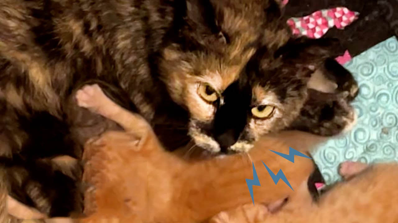 Scared and protective mama cat becomes a snuggly house cat