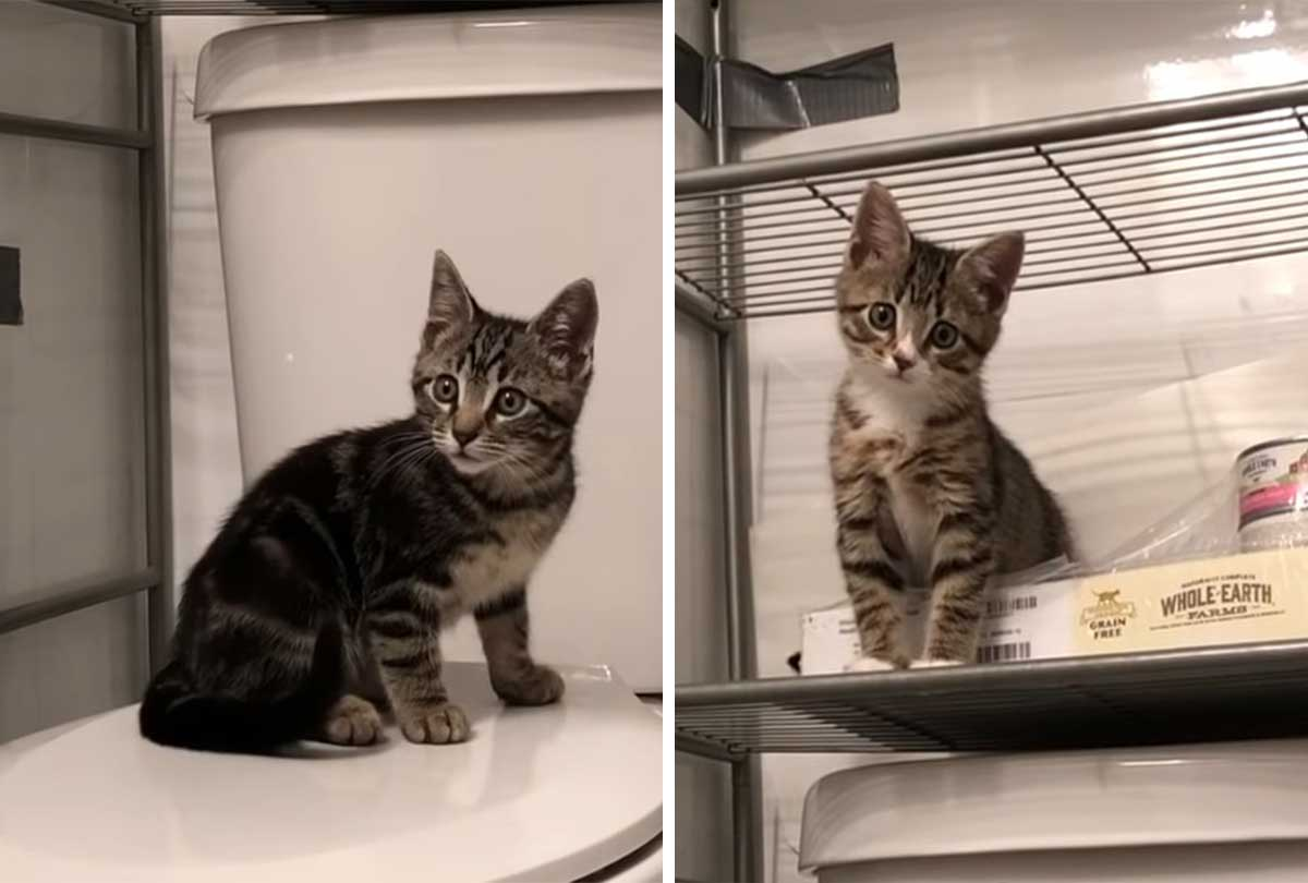 Rescuing two abandoned kitten brothers