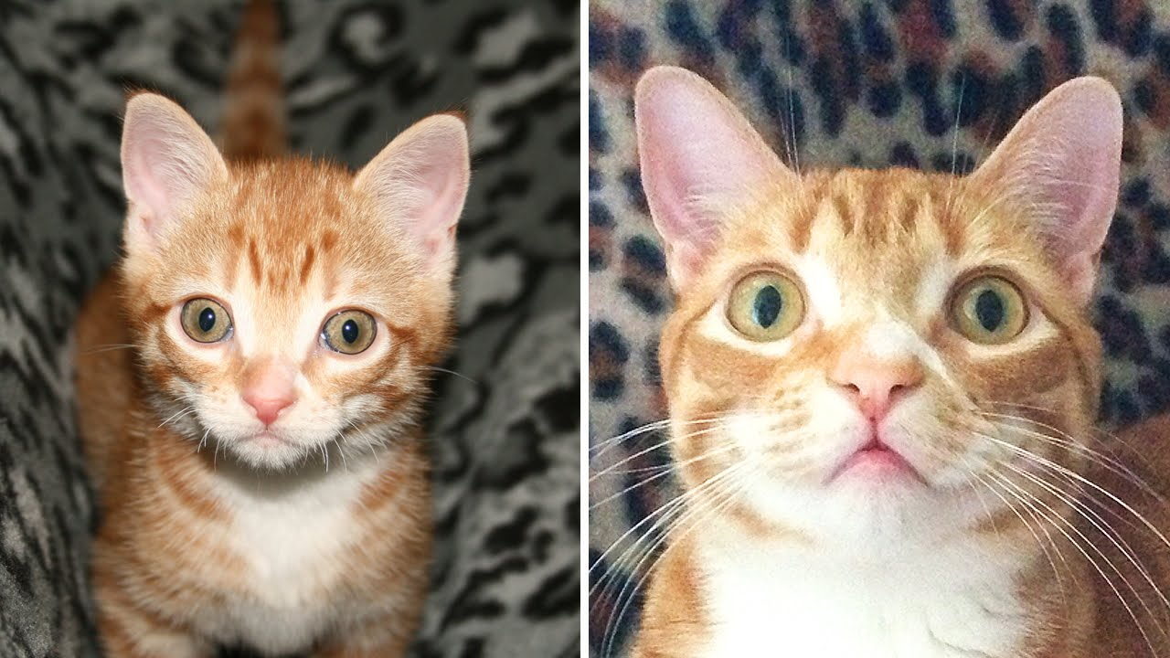 From Kitten to Cat! - Cute Compilation