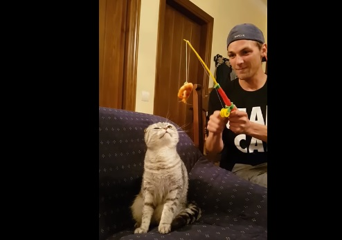 Guy Lures Cat With Shrimp On Fishing Toy
