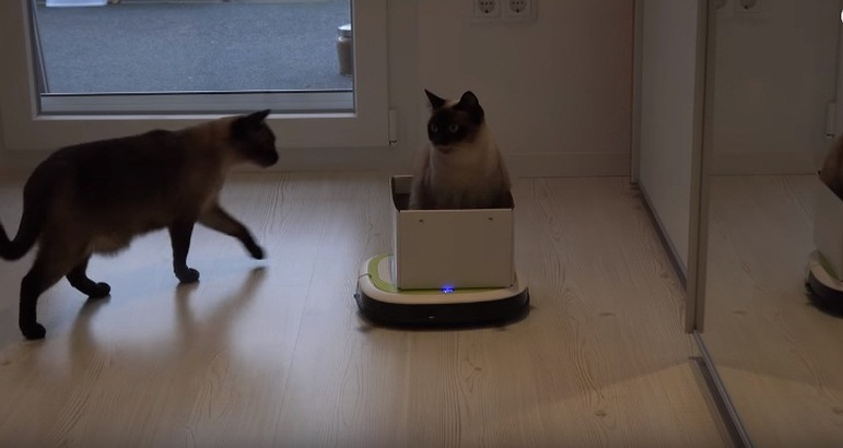Cat Rides Vacuum Cleaner Robot