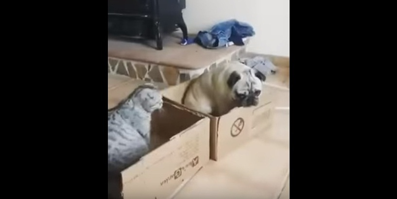 This Cat Wants All The Boxes