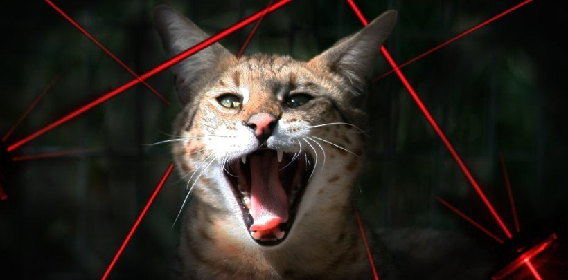 Big Cats Vs Laser Pointers