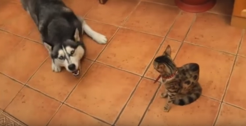 Funny Dogs Annoying Cats with Their Friendship