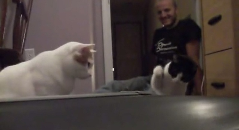 Cats vs Treadmill