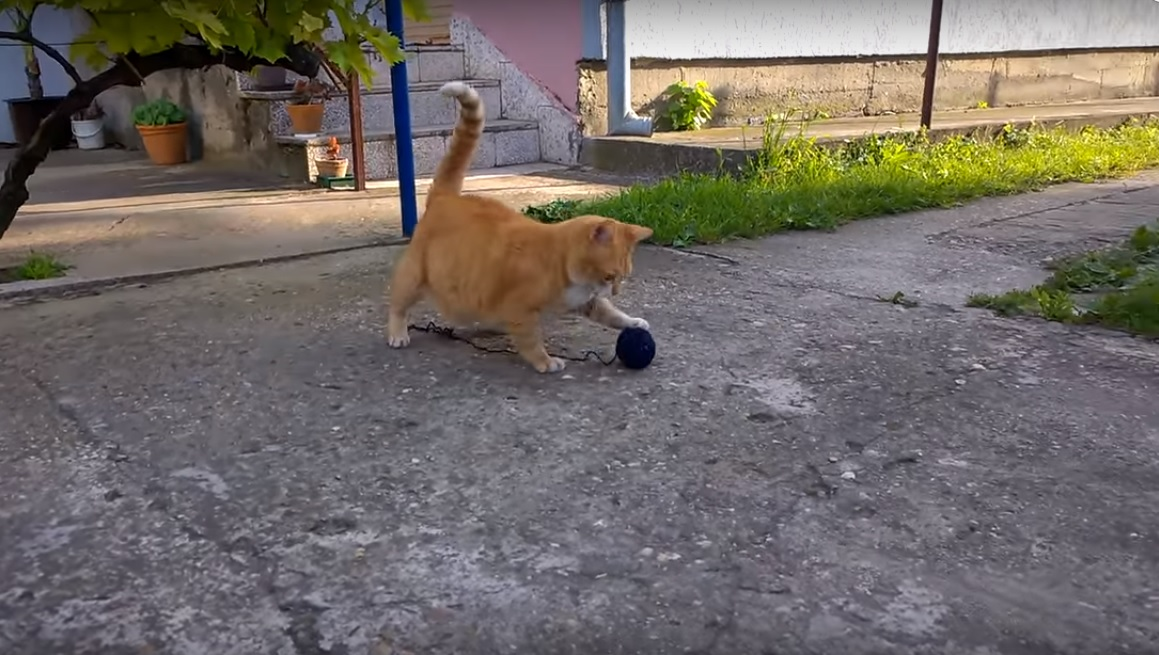 Cat vs Ball of Wool