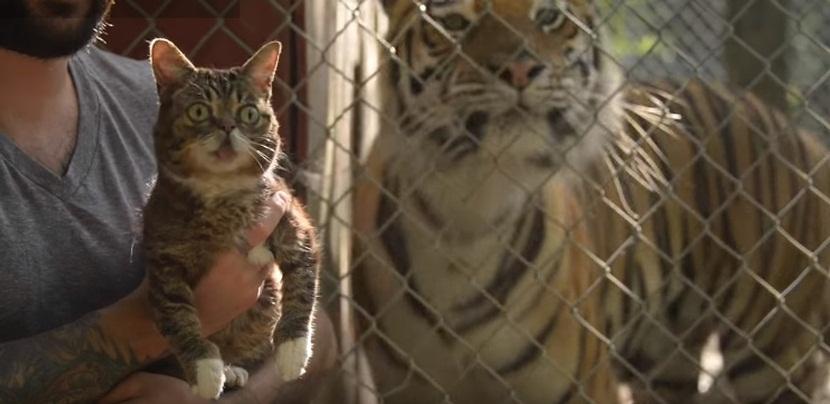 Bub Meets Tigers