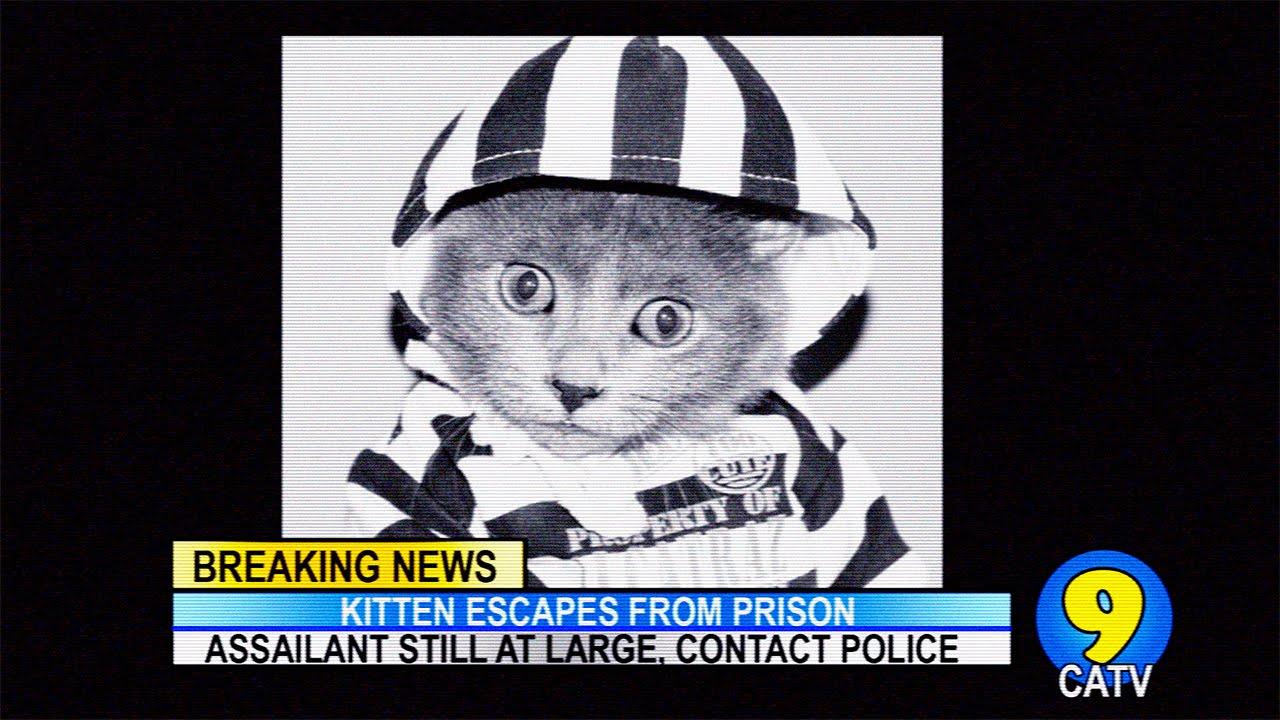 Cute Kitten Convict Escapes From Prison