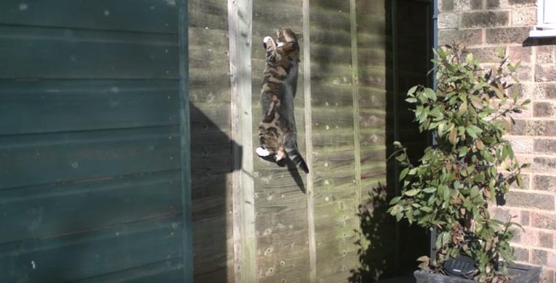 Gravity Defying Cat