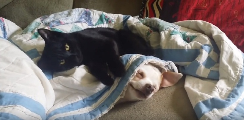 Funny Cute Cat And Dog Playing