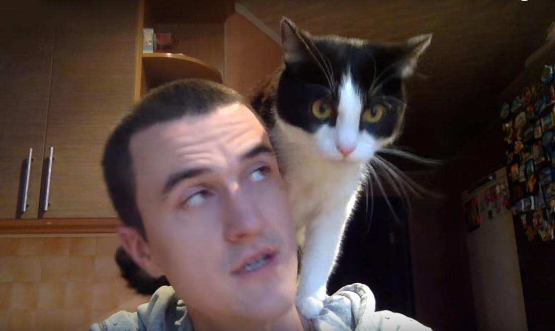 Cat demands attention
