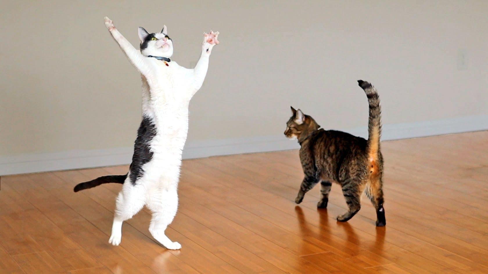 Kitties Dance with Ceiling Fan