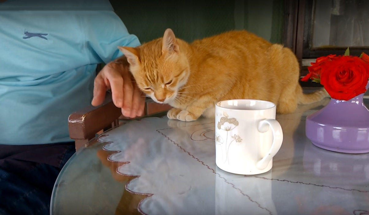 The Bond Between a Cat and Its Human