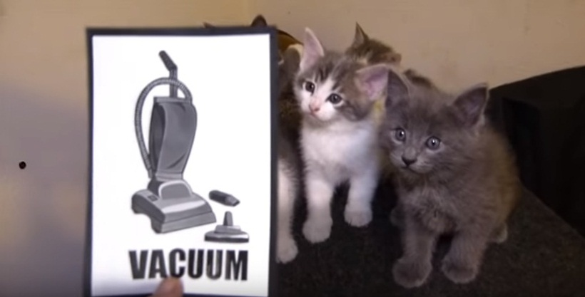 Talking Kitty Cat - Kittens Vs Vacuum