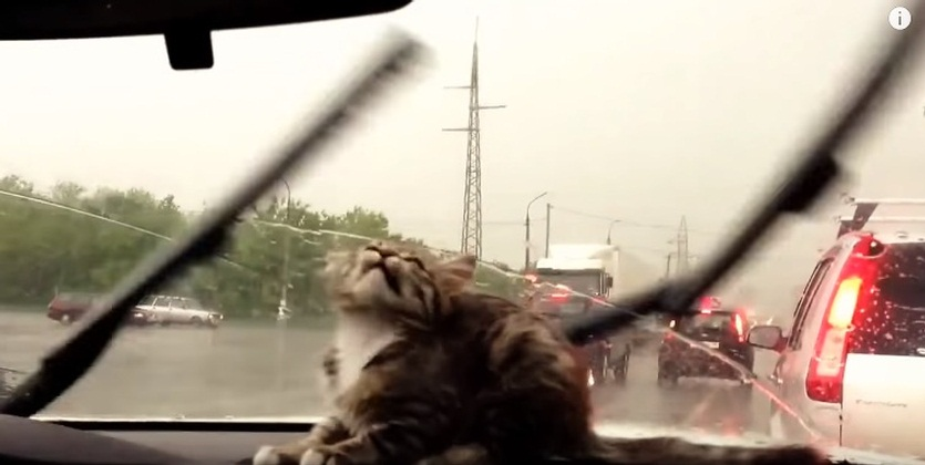 Cats vs. Windshield Wipers Compilation