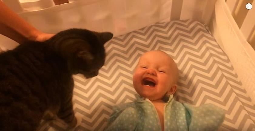 Baby Adores Cat