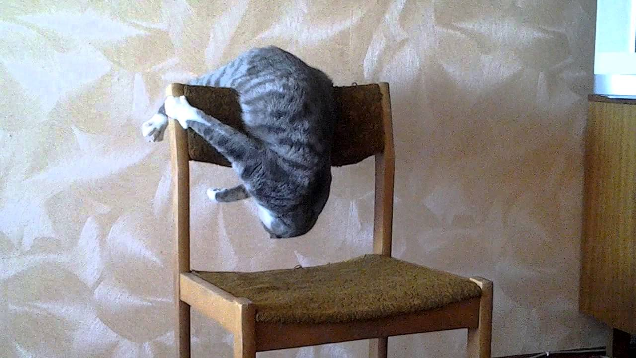Cat Attacks Chair
