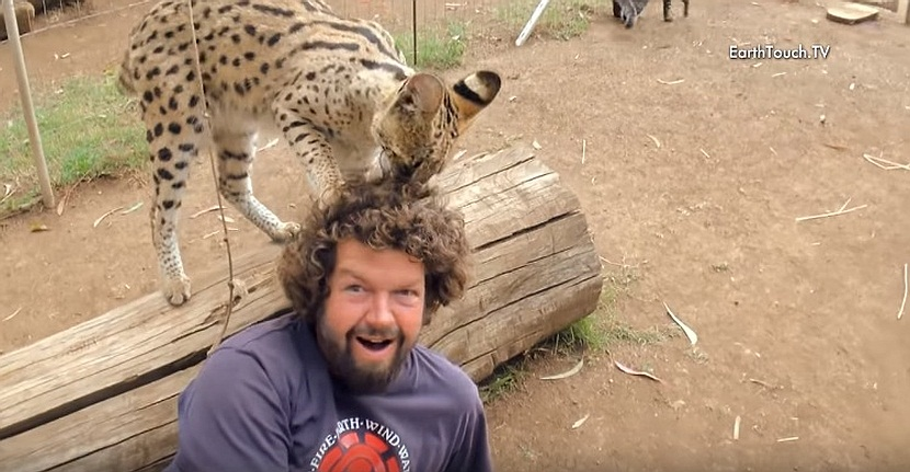 Wild Cat Loves Cameraman's Hair