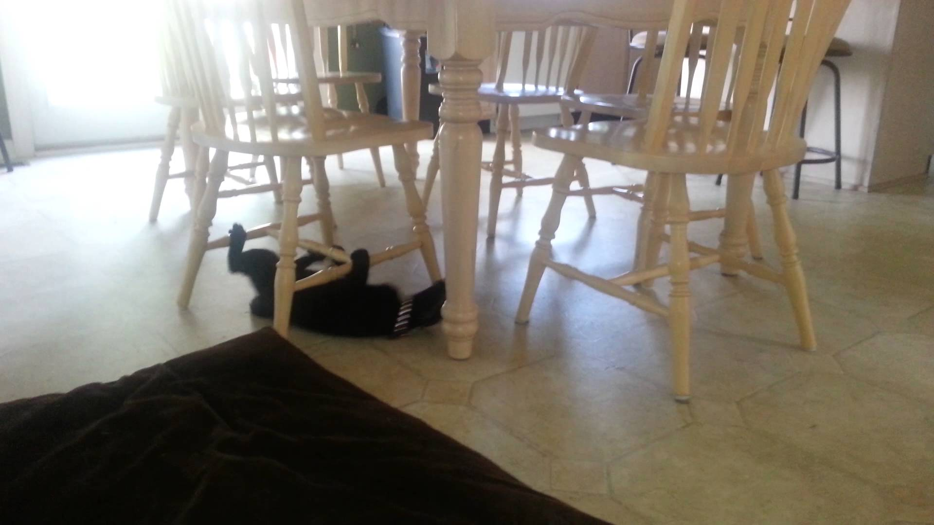 Cat drags itself around underneath table