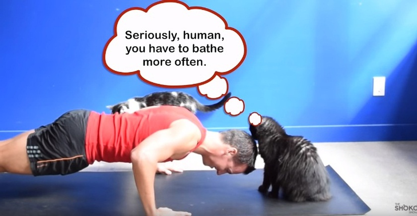What Cats Think When You Exercise