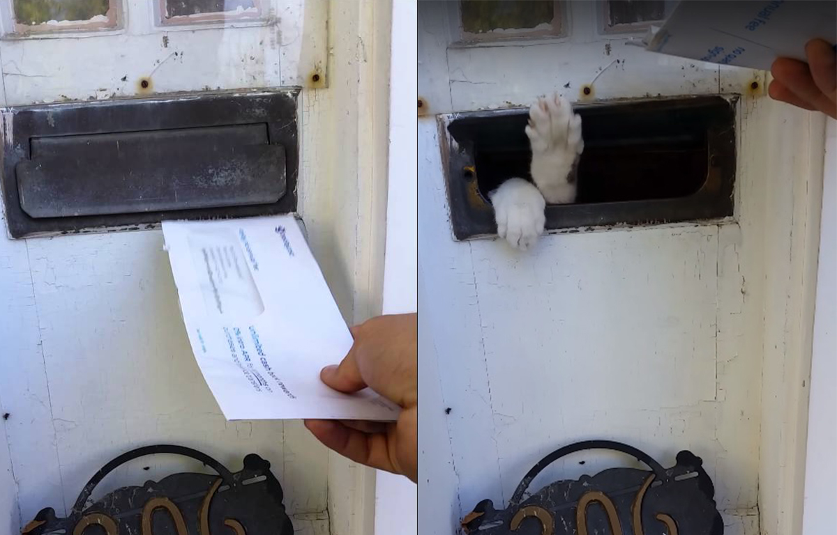 Cat attacks mail!