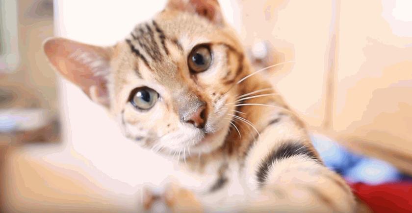 Benji The Cat [Kitten Montage!]