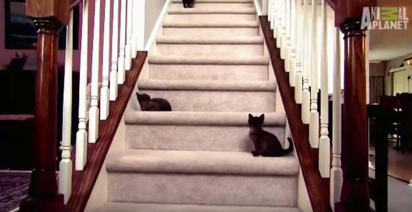 Baby Kittens Face Staircase