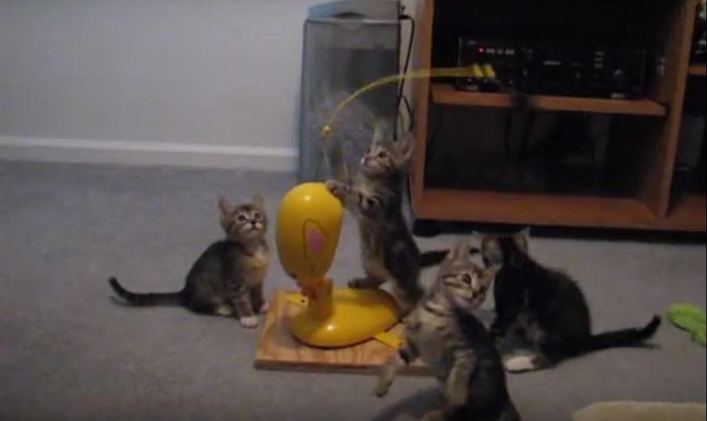 Funny Jumping Kittens