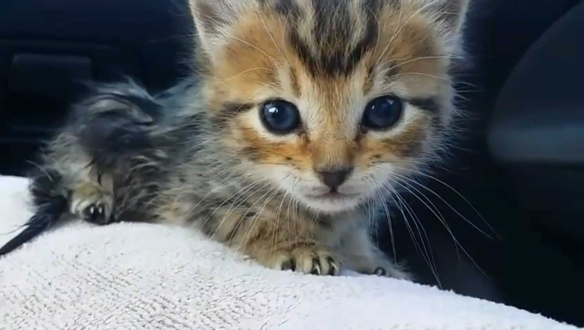 Saving an abandoned kitten