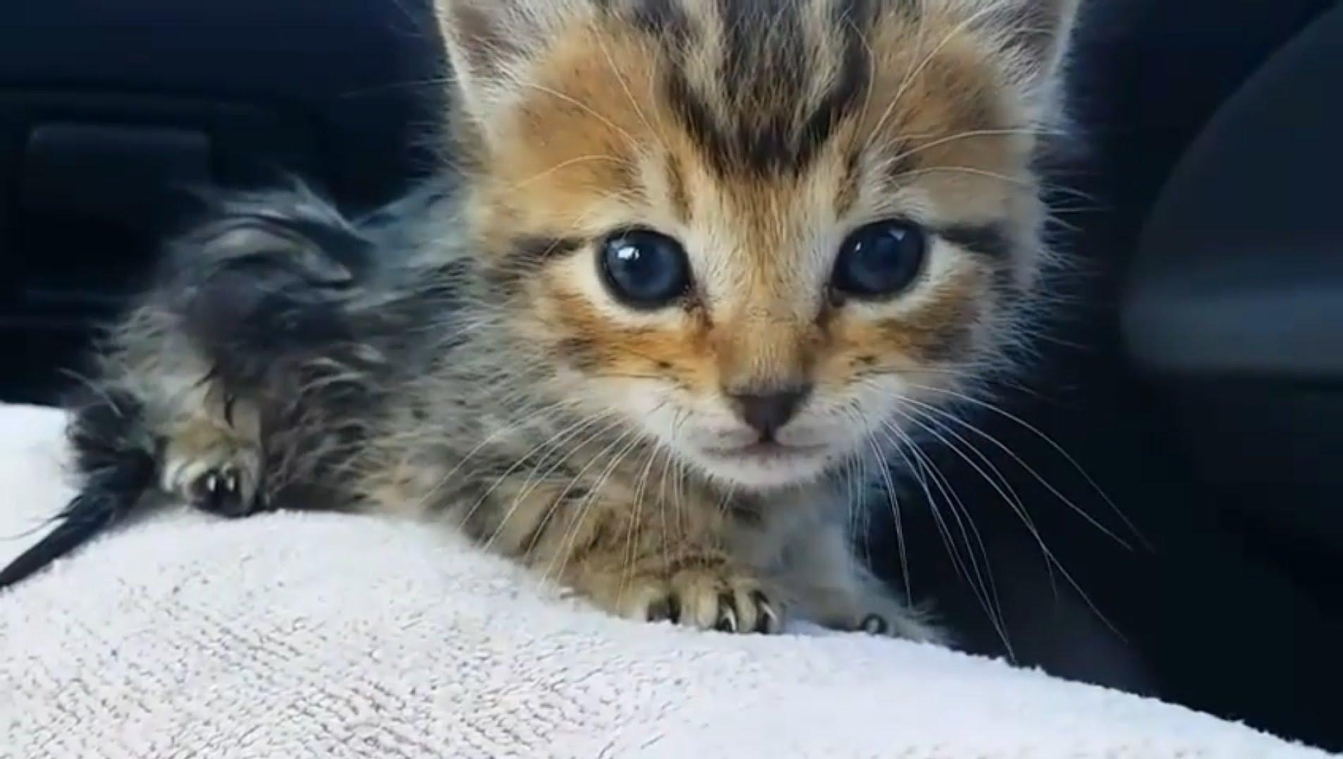 Saving an abandoned kitten