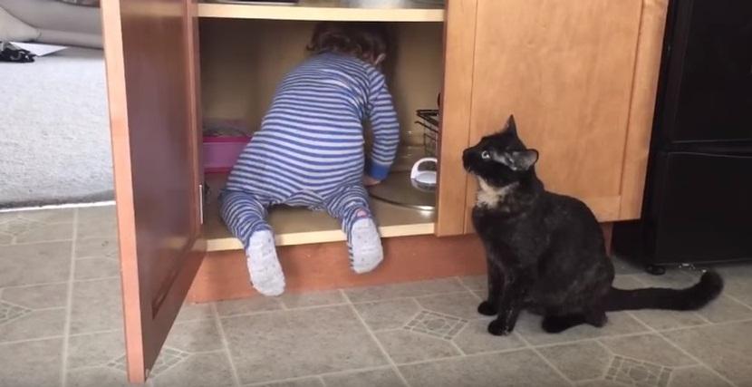 Funny Cat Closing Cabinet Door On Kid