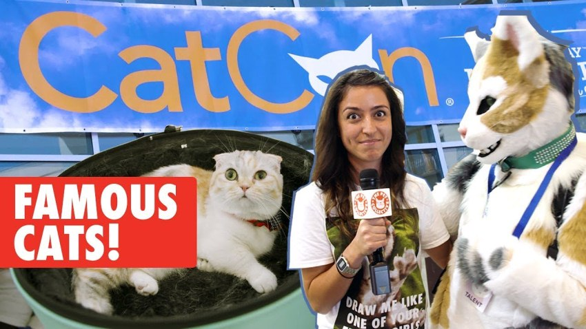 The Pet Collective Goes To CatCon 2017