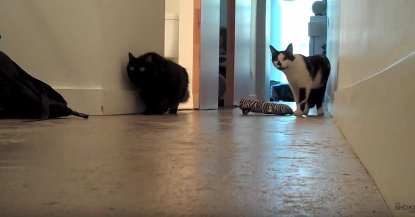 Ninja Cat Gets Stalk-Blocked