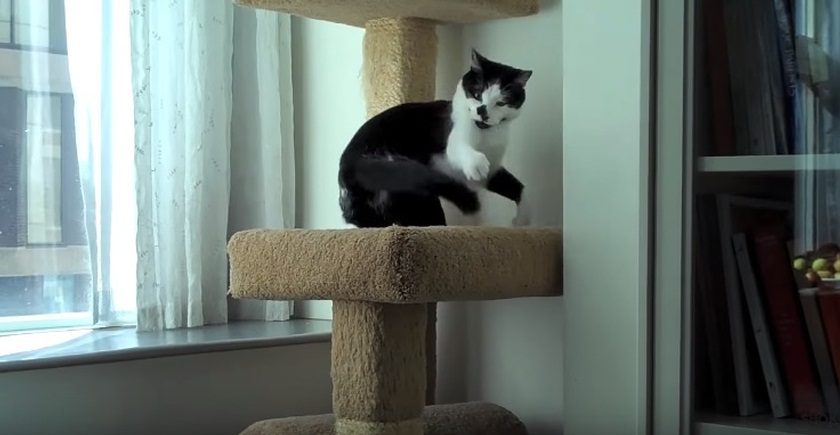Extremely Energetic Cat Will Brighten Your Day