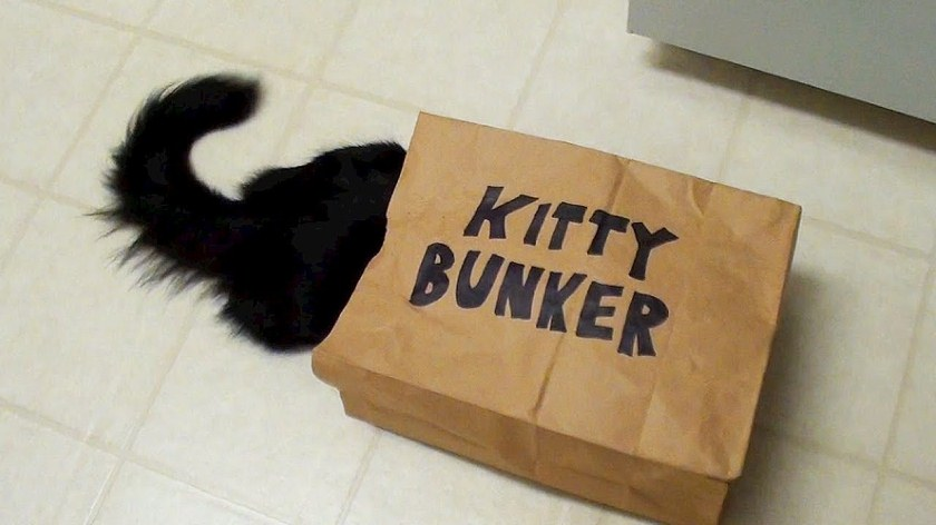 Kitty Hides From ZOMBIES !!