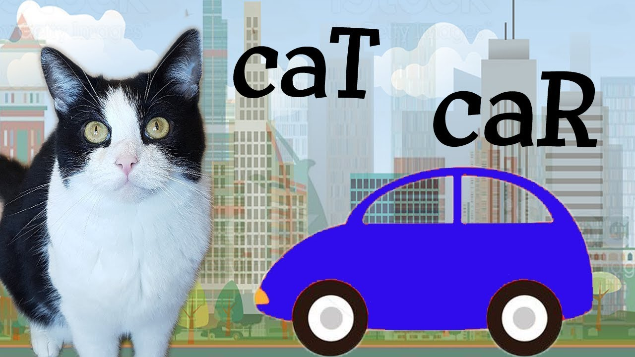 Similar features between a cat and a car