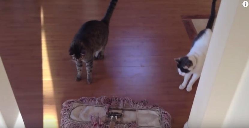 Cats VS Broom of Doom
