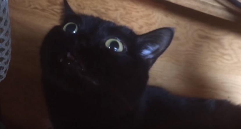 When The Catnip Kicks In