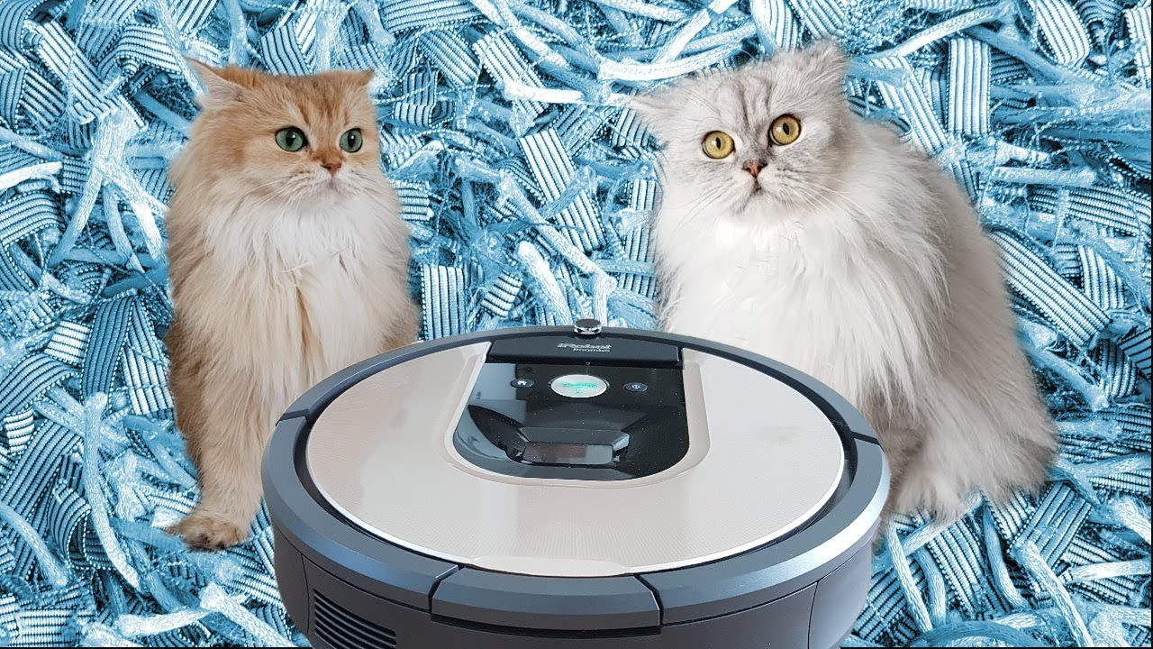 Smoothie & Milkshake react to robot vacuum