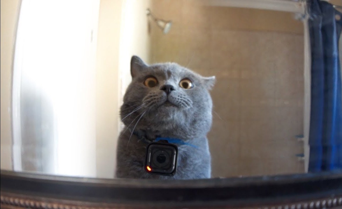 GoPro on a Cat Left Home Alone