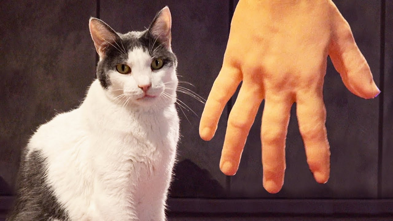 Funny Cats Pet By Weird Robotic Hand