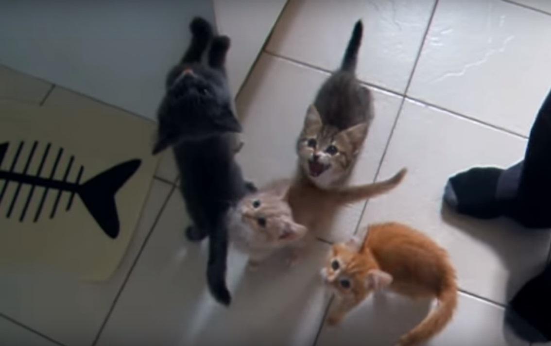 Noisy kittens waiting for dinner!
