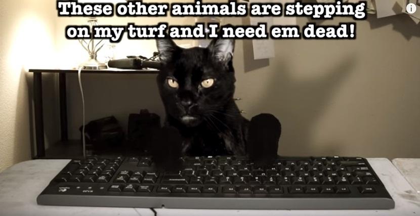 Talking Kitty Cat - A Cat's Revenge